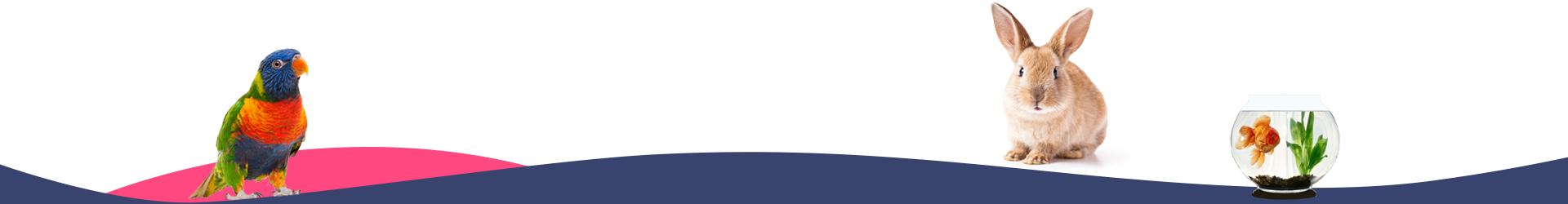 Home – Strona główna ZooHurt